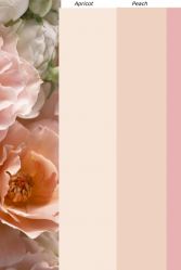 Natasha Millani Peach & Pink coloursColor Chart