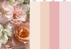 Natasha Millani Peach & Pink colours Color Chart